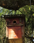 great tit nestbox