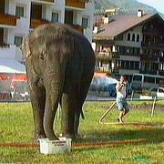 Elefant in Samnaun